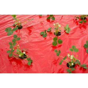 Kweekfolie voor aardbeien 0.95 x 5 m