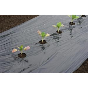 Kweekfolie voor grote groenten 0.95 x 10 m