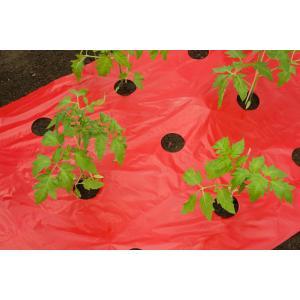 Kweekfolie voor tomaten 0.95 x 5 m