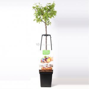 Pruimenboom mix – fruitbomen