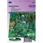 Echinops bloemzaden - Kogeldistel blauw