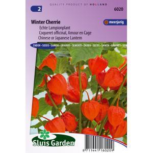 Echte lampionplant bloemzaden – Winter Cherrie