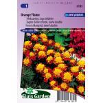 Lage dubbele Afrikaantjes bloemzaden – Orange Flame