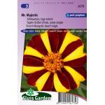 Lage enkele Afrikaantjes bloemzaden – Mr. Majestic