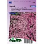 Muurzeepkruid bloemzaden – Zeepkruid