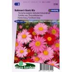Perzische margriet Dalmatisch vlooienkruid bloemzaden - Robinson's Giants Mix