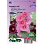Vijgenblad stokroos bloemzaden - Antwerp Star Mix