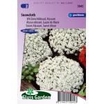 Wit Zeeschildzaad Alyssum bloemzaden - Snowcloth