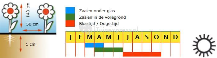 Zonnebloem enkelbloemig bloemzaden - F1 Sunrich Orange