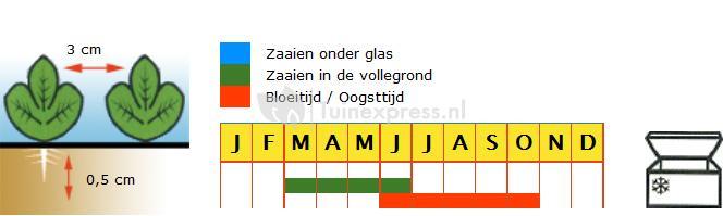 Wortel zaden - Amsterdamse Bak 2 Amfine